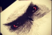 Favorite Pic.- Owl