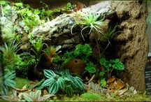 vivarium, terrarium and paludarium