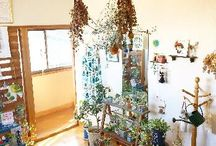 入賞作品ー阪急うめだ本店10階スークに掲示する写真を大募集!『植物と暮らす』フォトコンテスト