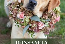 Pet Weddings / We are heading into wedding season... and we just don't think weddings are complete without your pets <3