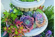 Garden / by Yasmine Machin