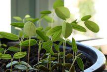 Plantes émotives