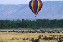 This is why i love masai mara safaris. / Masai mara is one of the world known park with stunning futures. www.soinafricasafaris.com