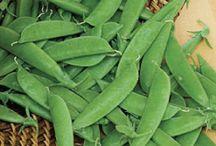 Garden: Veggie Favs
