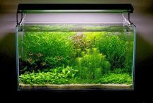 Aquascape Ideas & Info / Info for aquascape lovers, like aquarium, plant, water, co2, technique, video info and many more