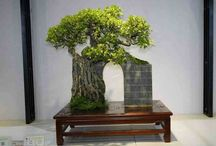 Tree Garden and Bonsai