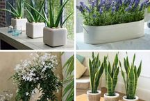 plantas para interiores,quartos,salas....