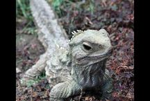 Pete's favourite reptiles from around the world / Some amazing species