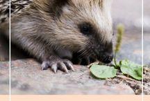 Amoureuse des animaux / Retrouvez ici tous les articles publiés sur Belette Rousse pour la protection et l'observation des animaux !