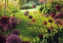 ☆ Gardens and plants  ☆ / there is another very beautiful place on this earth. small and cozy garden helps to relax