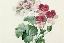 botánica ilustración