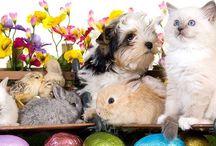 Nourrir ses animaux / Découvrez tous les aliments que nos petits compagnons peuvent manger ou non