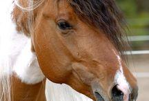 Horses / BEAUTIFUL