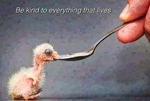 Being Human !!!!