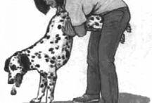 Dog Health // Kutya egészség