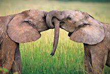 Elefanten / für Bettina, die elefantenreiterin <3  - fotographierte, gezeichnete oder sonstige Elefanten