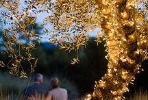 Tree dressing/ decoration