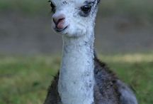 Dyr / Dyr er interessange og søte derfor ser jeg på dyre bilder
