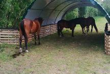 Paddock en paarde-ideeën
