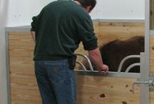 Miniature Horse Stalls / All about minis! Horse stalls that are perfect for your miniature horses.