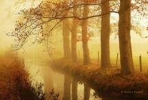 Misty Moments2 ************** / Mist,fog,smoke and haze sometimes makes a beautiful moment..