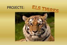 Projectes animals