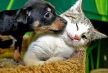 como fazer seu gato e cachorro se darem bem