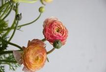 Fleurs / by Zanne Blair