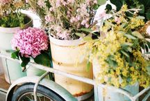 + spring feels / blooming spring florals and pretty spring places
