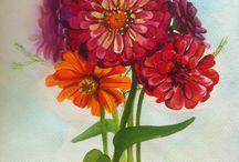 zinnia / watercolor