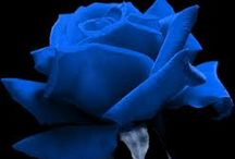 BLUE FLOWERS / by Erwin Pempelfort