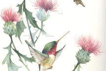 Bilimsel Bitki İllüstrasyonları/Botanical Illustration