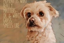 A Letter to My Best Friend / Portraits of our best friend - the dog