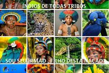 SAVE THE AMAZON RAINFOREST !