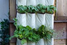 garden  and backyard ideas / by Lorena Brown