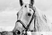 Equine portrait photography