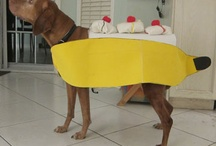 Doggie costumes / by Tanya Madden