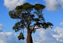 LIVING BOTTLE TREES
