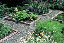 vege plot