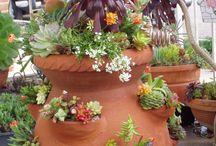 ev bitkileri