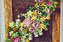 giromagi frames / frames, succulents, echeveria, diy,