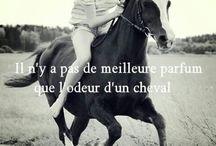 citation horse