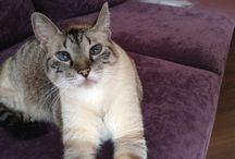 Love cat's / Tudo sobre os amados e queridos gatos. Ótimo para quem gosta de gatos. Tem de tudo um pouco sobre os melhores tratamentos de gatos e argumentos interessantes sobre os meus gatos e de todos.
