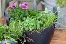 balcón&plantas