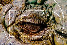 FD / Serás tú quien encienda la luz que me guíe a la serenidad. #lighthouse #cape #sunset #coastside #beach #sea #bestphoto #documentary #photography #travel #outdoors #adventure #landscape #natgeo #natgeowild #natgeotravel #natgeoadventure #bbc #bbcearth #bbctravel #discovery