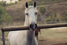 Live well, laugh often, love horses / by Lori McKeel
