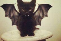 mascotas en hallowen