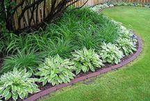 Сад композиции растений