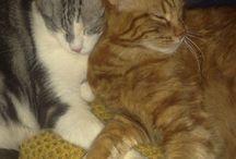 Gatti / I miei A-mici