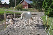 Tarha-ideoita / Ideoita miten luoda virikkeellinen ja helppohoitoinen tarhaus hevosille